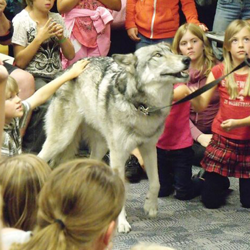 Tundra - Wolf education school program