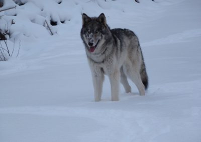 Tundra-Snow1LO